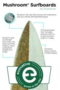 Mushroom Surfboard infographic