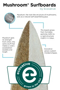 Surf Infographic 09 24 13